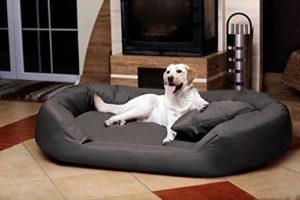 canapé orthopédique pour chien