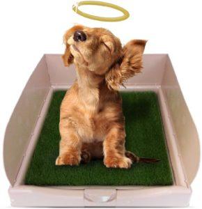 litière pour chien