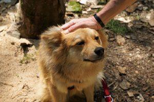 éducation positive chien