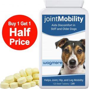 anti inflammatoire pour chien