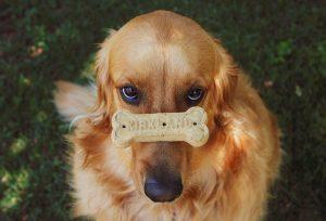 meilleure friandise pour chien