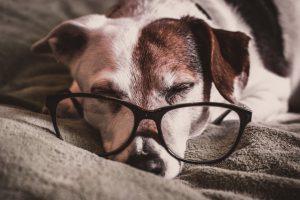 comment calculer l'âge d'un chien ?