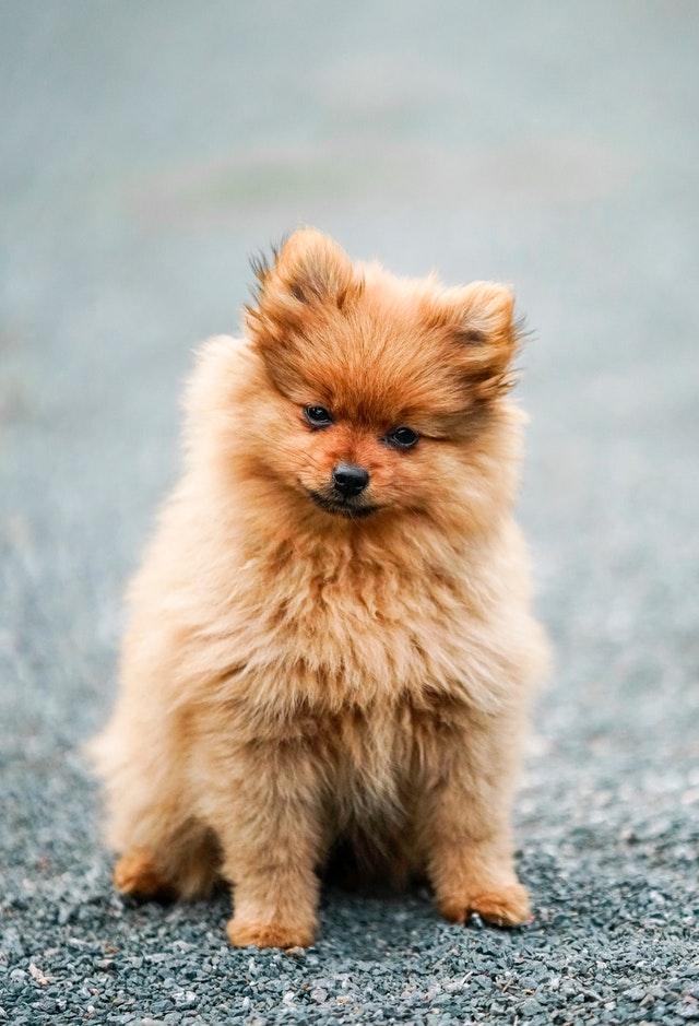 prénom de chien
